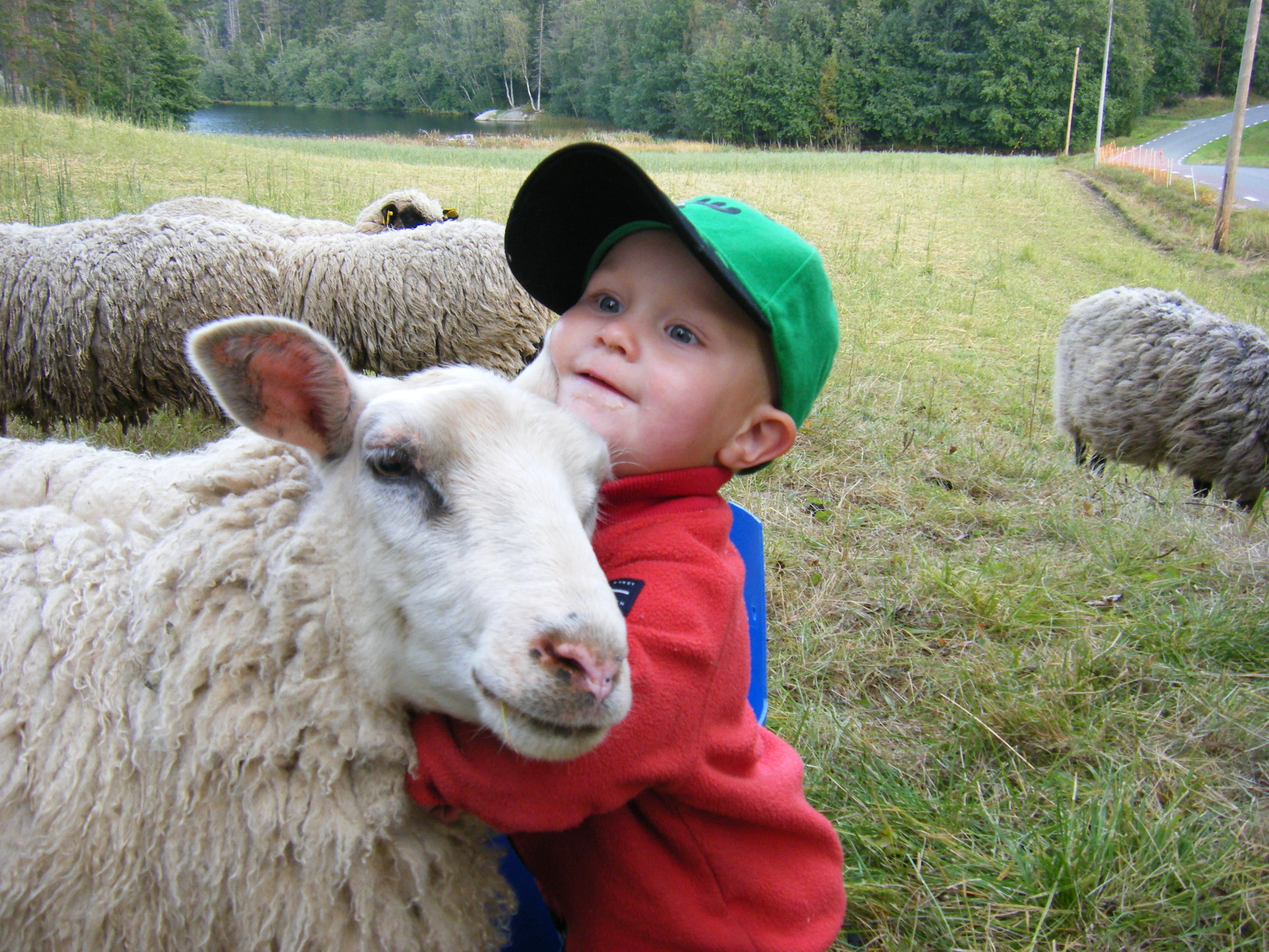 Lammkött i Örnsköldsvik - lammkött Örnsköldsvik